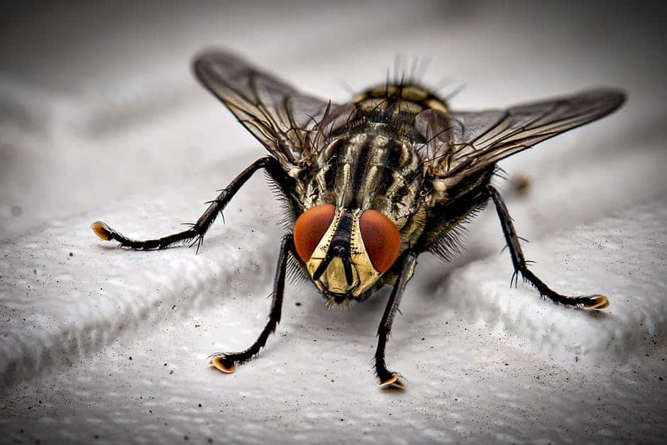 businesses can prevent pests
